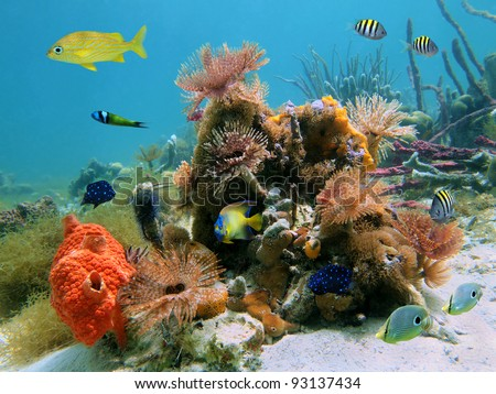 Colorful underwater marine life with tropical fish and feather duster marine worms in the Caribbean sea