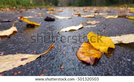 Colorful willow leaves on wet asphalt sidewalk in cloudy autumnal weather. Close up landscape with details, taken at ground level. Finland, Northern Europe