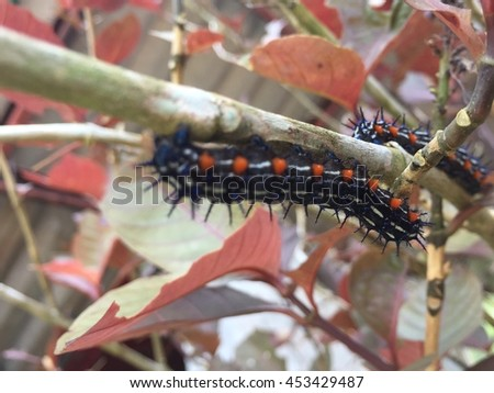 Colorful worm on tree branch