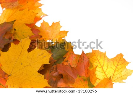 composition of autumn leaves on white background