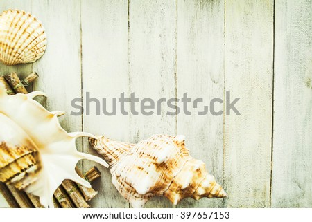 Concept of the summer time with sea shells on the wooden background