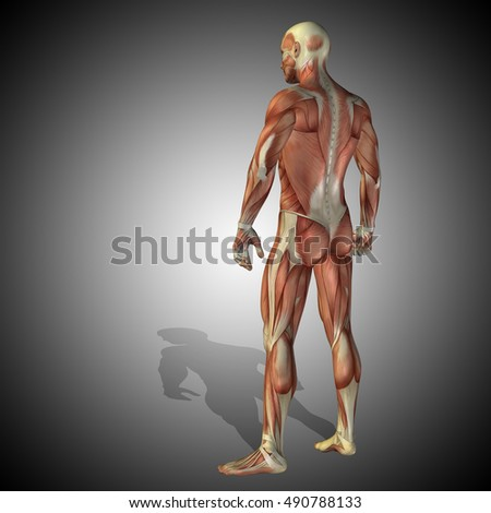 Concept strong human or man 3D illustration anatomy body with muscle over gray background for medicine, sport, male, muscular, medical, health, medicine, biology, anatomical strong fitness design