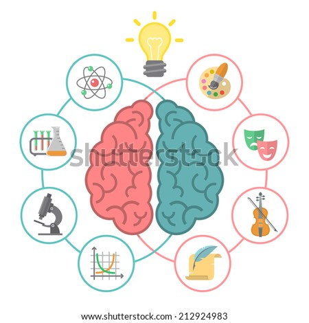 hemispheres of the brain essay Brain fact: the two sides of the brain are intricately co-dependent this myth holds that a right-brain person is generally creative, intuitive, artsy, while a left.