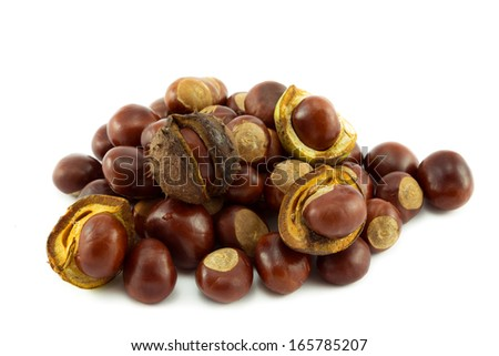 Conkers or Horse Chestnuts