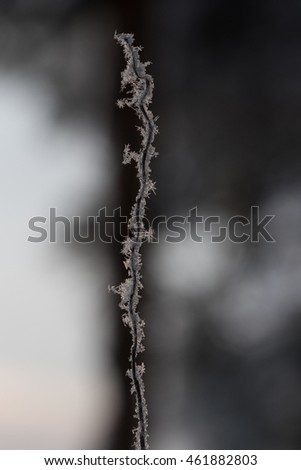 Contrast branch with crystals of ice and flakes of snow on it