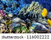Coral and fish in the Red Sea.Egypt - stock photo