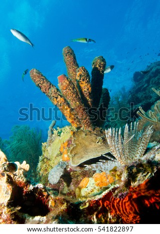 Coral head with tube worm exposed with few reef fish - Curaçao.