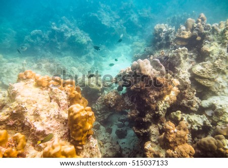 Coral reef and sea life with problem pollution in andaman