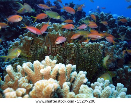 Coral reef underwater with many small fishes