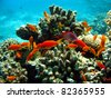 coral reef with shoal of fishes - stock photo