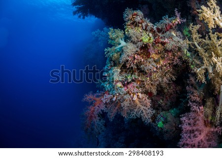 Corals on the reef, Ruqia Island, Red Sea, Egypt