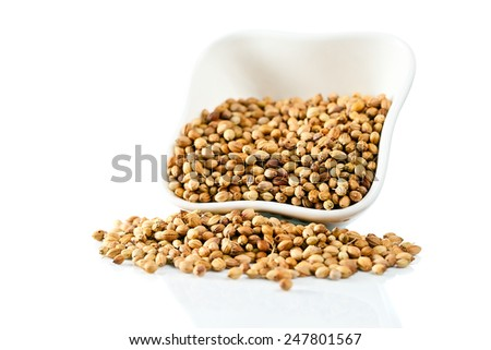 coriander in  small ceramic cup on white background