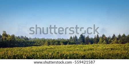 corn field near the forest