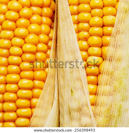 corn in a detail