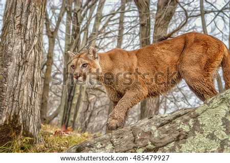 Cougar on the hunt,Northern Minnesota.Digital oil painting