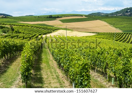 Country landscape of Monferrato (Asti, Piedmont, Italy) at summer, with vineyards