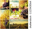 Country series. Collage of rustic wine, grapes and vineyard images. Autumn concept with red wine glasses, wine bottles, vineyard landscape and grapes in nature. - stock photo