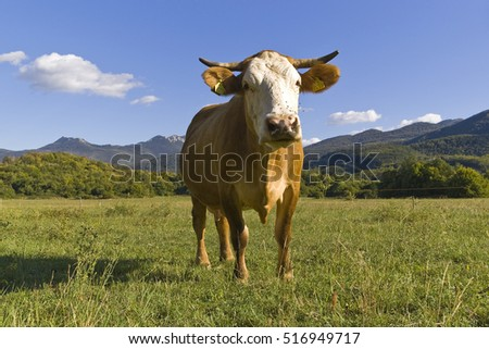 Cow on green field with mountains in the background