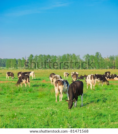 Cows Grazing View