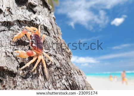 Crab on palm on beautiful caribbean beach in Dominican Republic
