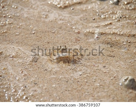 crab on the sand, low tide