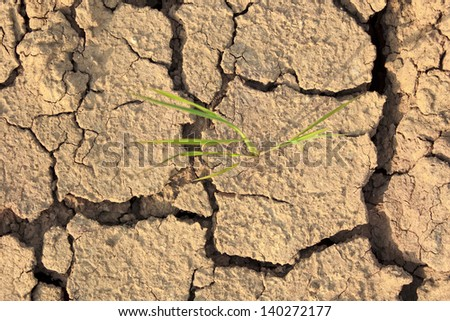 Cracked earth  landscape,New born