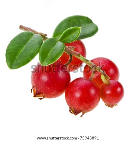 cranberry close up isolated on white background