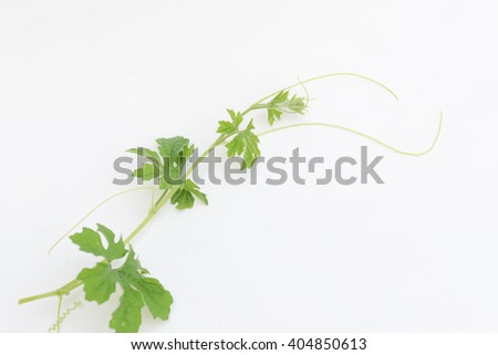 Creeper plant, isolated on white, clipping path