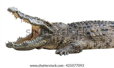 Crocodile Open Mouth Isolated with Clipping Path