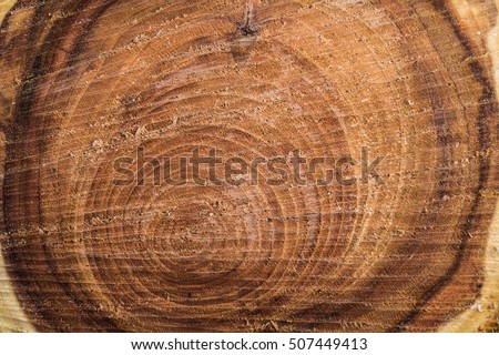 cross section of the tree close up