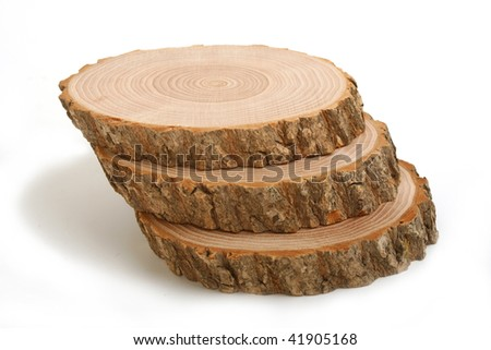 Cross sections of tree trunk showing growth rings on white  background