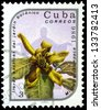 "CUBA - CIRCA 1986: A stamp printed in Cuba shows Michelia champaca Flower, with the same inscription, from the series ""Exotic Flowers from botanical garden"", circa 1986 - stock photo"