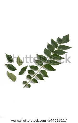 Curry Leaf on white background