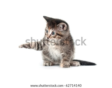 Cut tabby kitten playing on white background