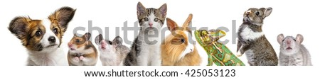 cute animals isolated over white