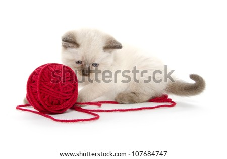 Cute baby cat playing with red ball of yarn on white background