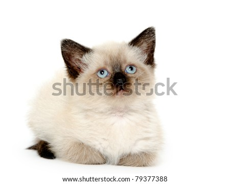 Cute baby kitten laying down on white background