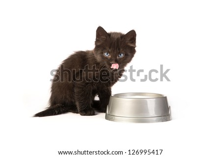 Cute black kitten drinks milk, isolated on a white background