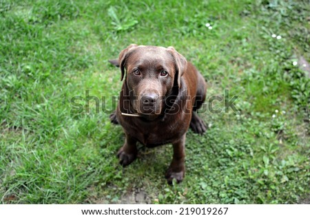 Cute brown dog looking up