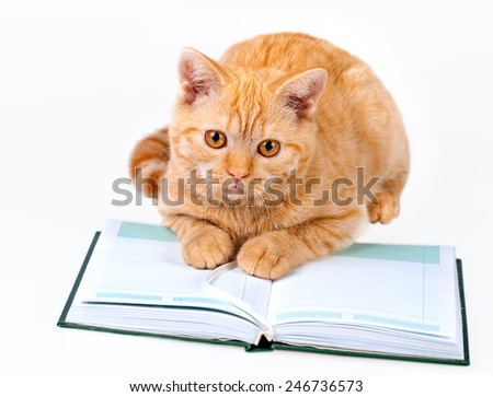 Cute business cat reading notebook (book) isolated on white background