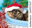 Cute cat wearing Santa's hat lying in a basket - stock photo
