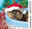 Cute cat wearing Santa's hat lying in a basket - stock photo