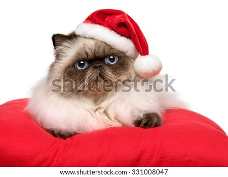 Cute Christmas persian colourpoint cat in a Santa hat is lying on a red cushion, isolated on white background