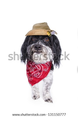 Cute country Havanese dog with straw hat and red bandana, isolated on white