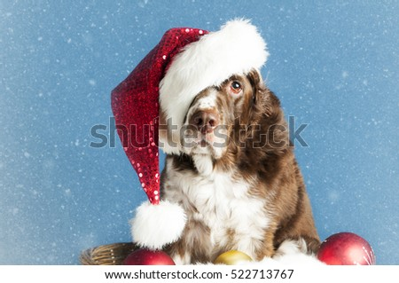 cute dog wearing a christmas santa hat in the snow