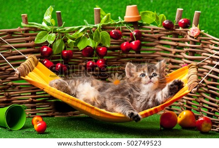 Cute fluffy kitten on the hammock over wattle fence background