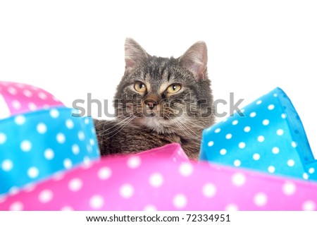 Cute gray tabby kitten with colorful ribbon on white background