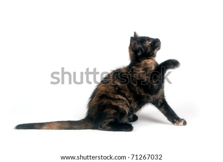 Cute kitten playing while on a white background