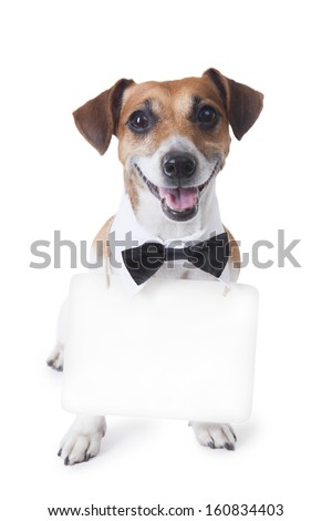 Cute little dog sitting with bow tie and a white collar with a signboard  around his neck, where you can post your information. White background. Studio shot