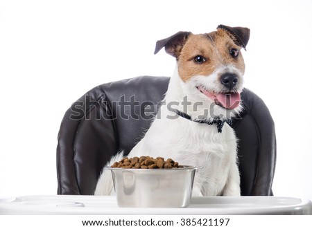 Cute pet and food in bowl